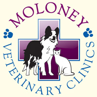 Moloney Logo