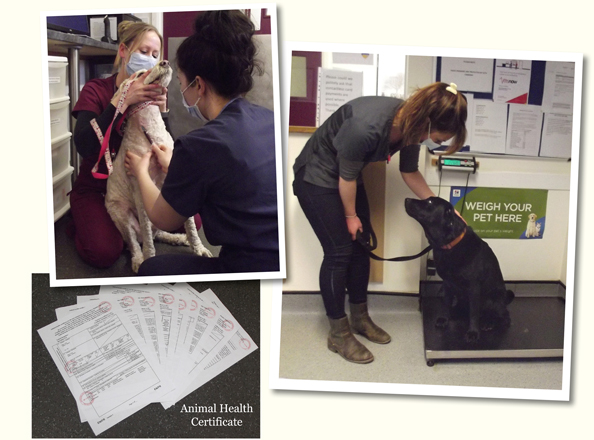 Moloney Veterinary Services