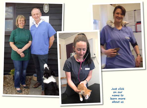Moloney Veterinary Staff